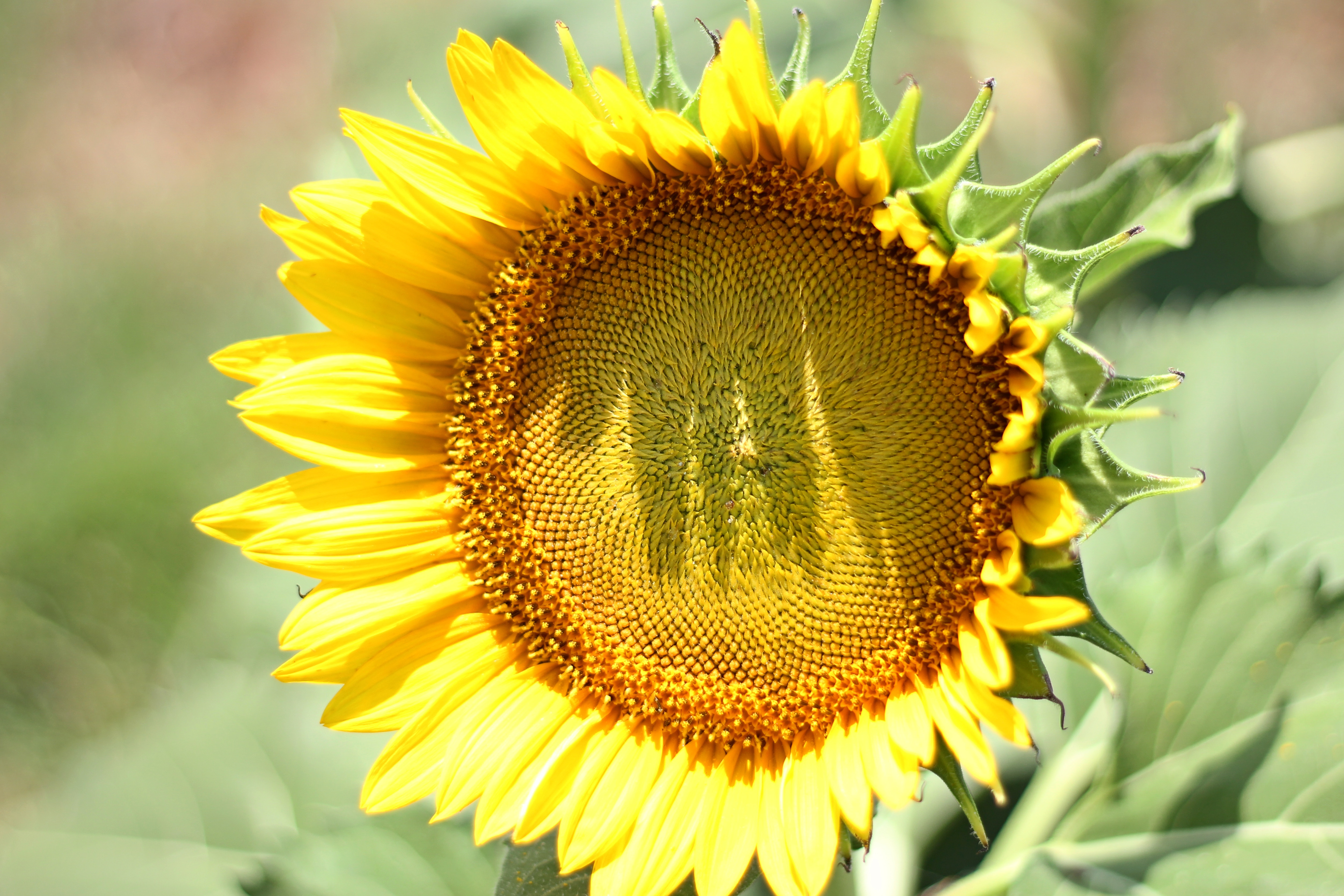 Don't Be A Sunflower