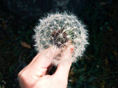 Hand Holding Dandelion